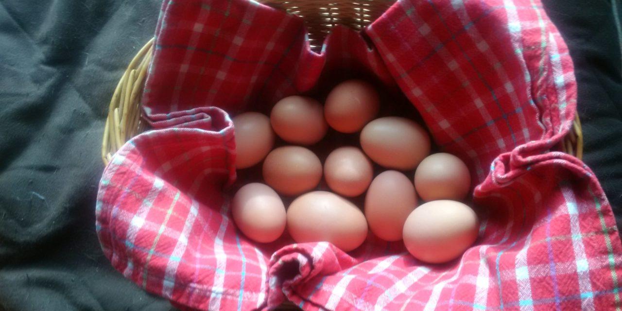 Renewable Resources – Eggs