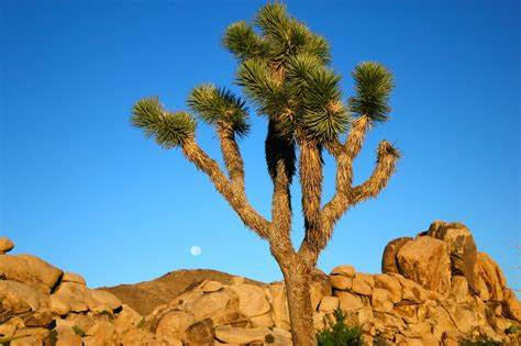 California City Dwellers Fleeing To Deserts And Mountains