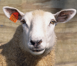 Digital Sheep: Why data privacy matters, by Silicon Valley Sniper