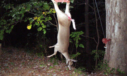 Skinning a Deer with an Air Compressor